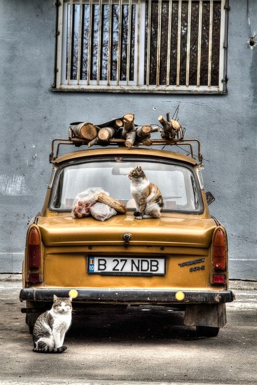 Cats on and around a yellow car in Bucharest, Romania