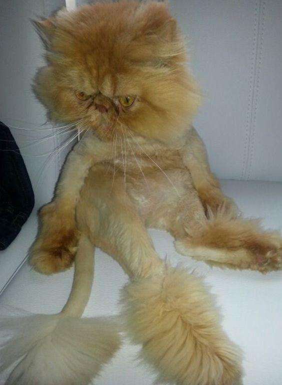 Cat Grooming Cat Hair