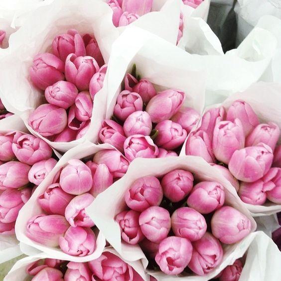 Beautiful pink tulips.