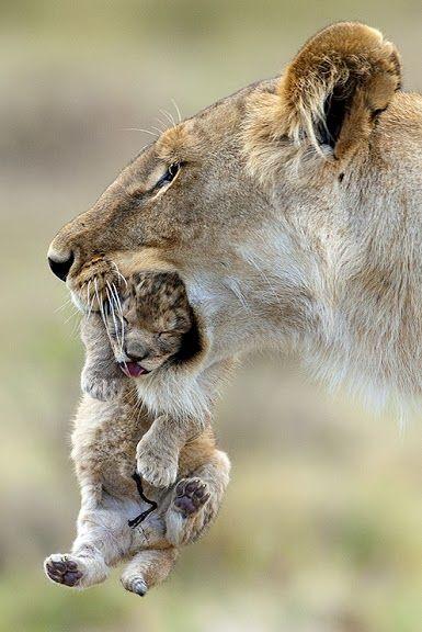 # animals #