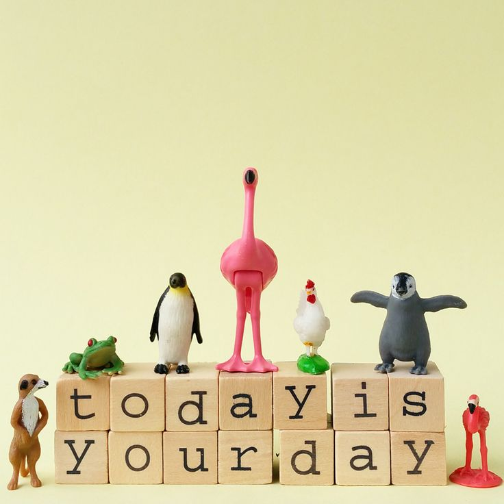 Today is Your Day #aflamingoaday