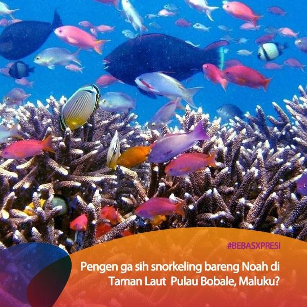 Pengen Noah konser di Maluku vote di bebasxpresi.com! #BebasXpresi