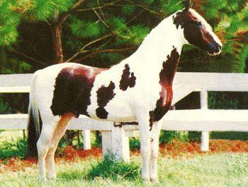 Os cavalos malhados, conhecidos como pampas, durante muitos anos foram injustamente discriminados por uma minoria de criadores elitistas. Ao mesmo tempo, e