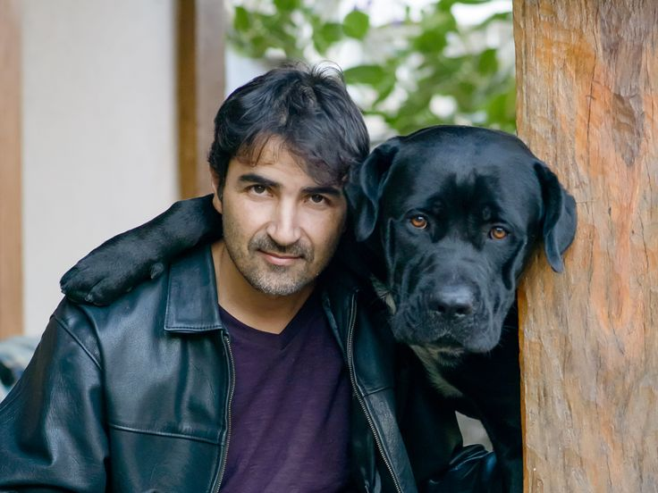 italian mastiff, cane corso italiano, black dog, italian cane corso, cão de guarda