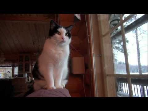 ▶ Laulu: Jospas minä kissan saisin (YouTube)