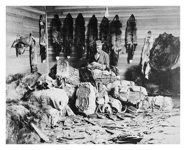 Fur trade. Alberta, 1890s