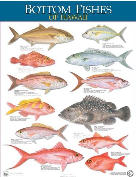13 best hawaii fishing images on pinterest snorkeling for Hawaiian fish identification