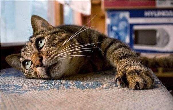 Днем, смешные стихи про кошек в картинках