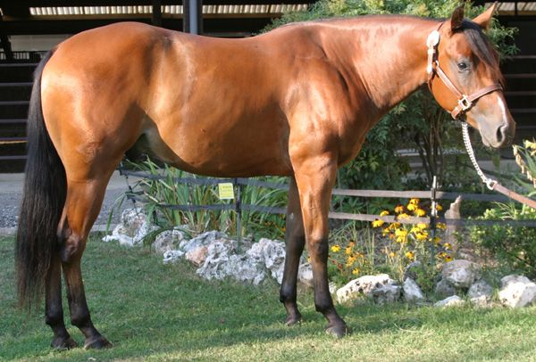 Mr COdy Twister ... nice and fine reining horse! Mr Cody Bee (TopSailCody) and a Play in it out Dam