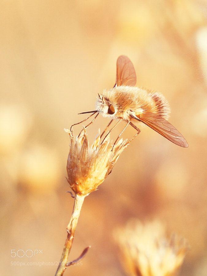 Farewell to summer. Прощание с летом by akunitsin2014