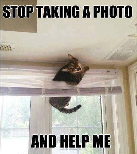 Okay this has actually happened with one of my fur babies :) lol