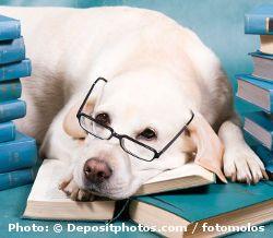 Labrador Breed Information