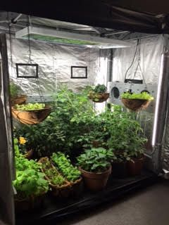 1000 Ideas About Indoor Greenhouse On Pinterest Growing