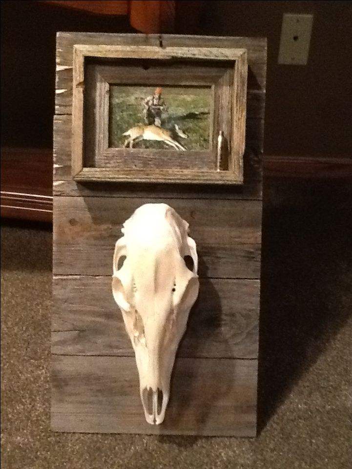 How awesome is this idea for a European mount? This skull is from Sandra Comer's first doe and it was made by her husband. Sandra is a member of Hunting 101 in South Dakota, which is a class where women learn to hunt and process wild game. Prois proudly sponsors this amazing group of ladies!