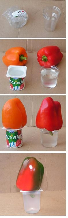 Tried this tip today and it really seems to work. Red bell pepper glowing with health! :D Lots of other neat tips on the same page. :)