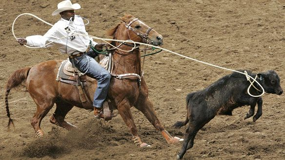 A Profile of Fred Whitfield: Fred Whitfield makes a successful catch at the 2006 San Antonio Livestock Show and Rodeo.