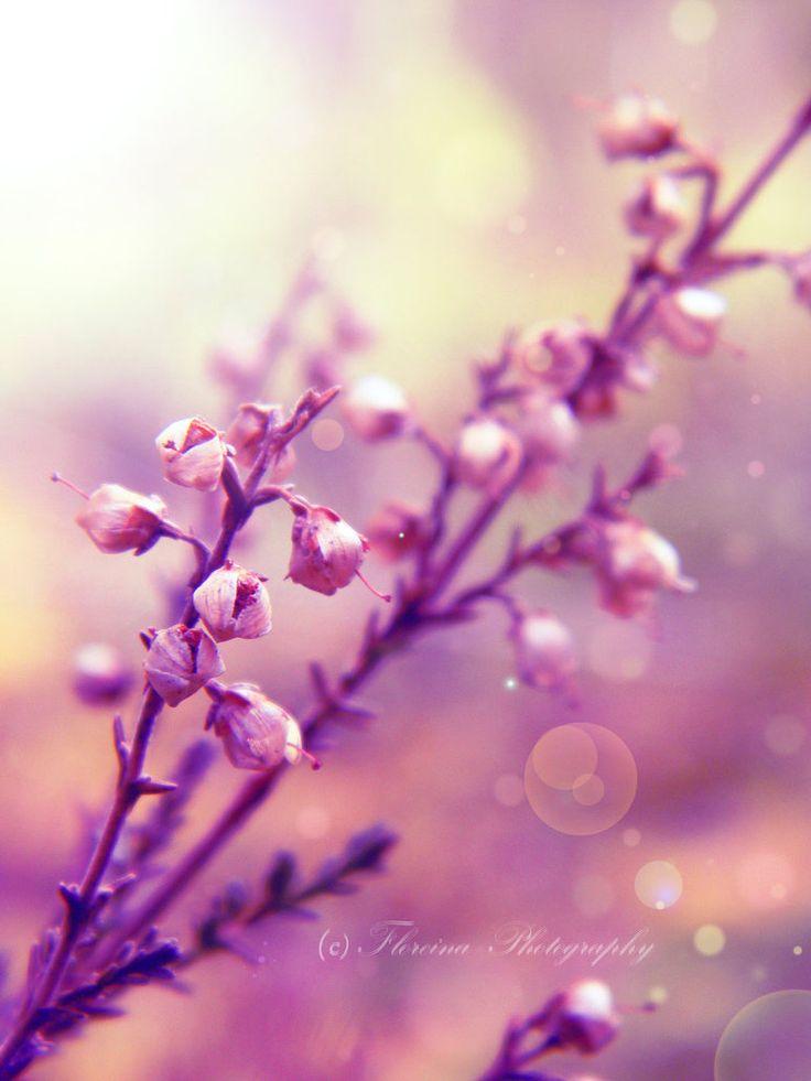 Ikebana by Floreina-Photography #ikebana #flowers #nature #photography #plants #pink #color #spring #lovely #beautiful #dreamy #macro #finland #scandinavia #suomi #kukkia #kaunis #bokeh
