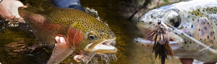 22 best images about trout fishing north georgia on for Fly fishing north georgia