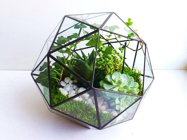 Плосконосый куб с суккулентами, хедерой и мхом #V2florarium #флорариум #террариум #флорариумспб #флорариумназаказ #флорариумссуккулентами #флорариумручноиработы #суккулент #хедера #тиффани #алоэ #мох #florarium #terrarium #succulent #tiffany