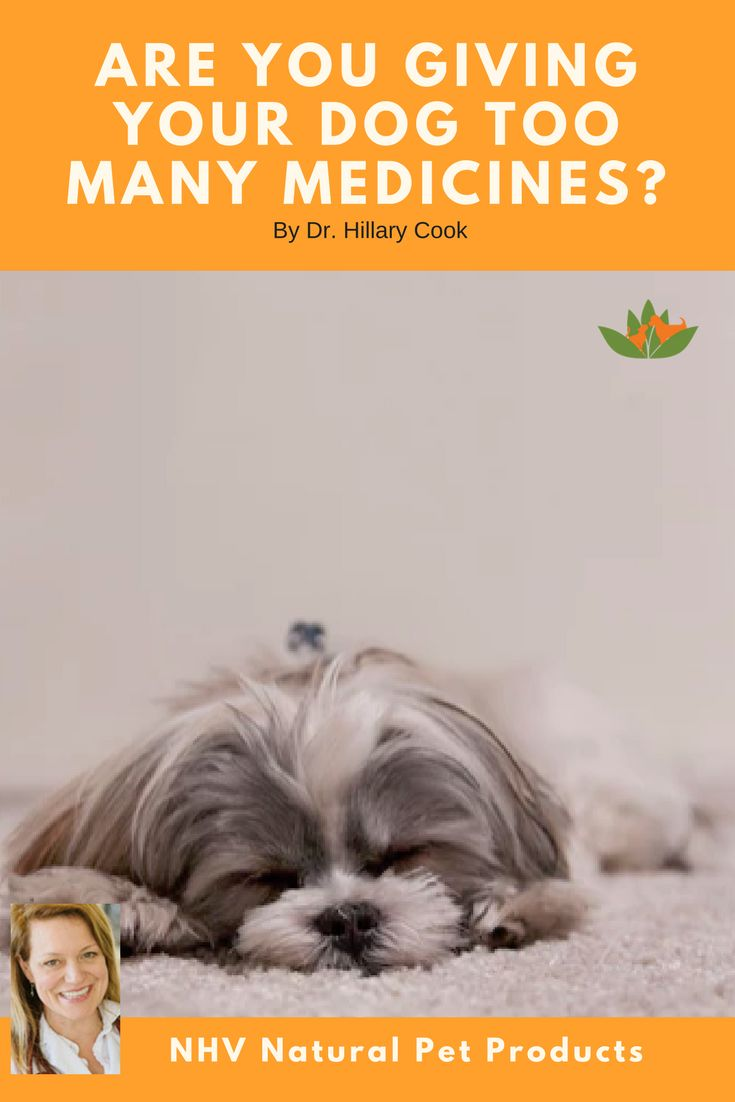 Cancer herbs for dogs - Herbal Remedies For Pets What Is It And How Does It Work