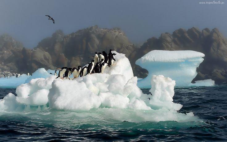 Pingwiny, Mewa, Góra, Lodowa