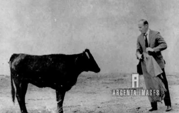 """""""American astronaut Charles Conrad,in a ring instead of an orbit, tries his hand at bullfighting here 10/16 but the bull looks like he could hardly care less. Conrad was attending a typical Spanish """"fiesta campera"""" given by former matador Luis Miguel Dominguin for members of the International Astronautical Congress."""""""
