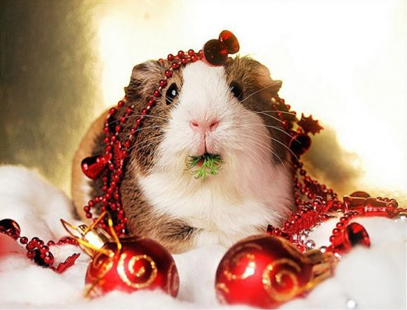 beautiful hamster decorated with Christmas tree ornaments