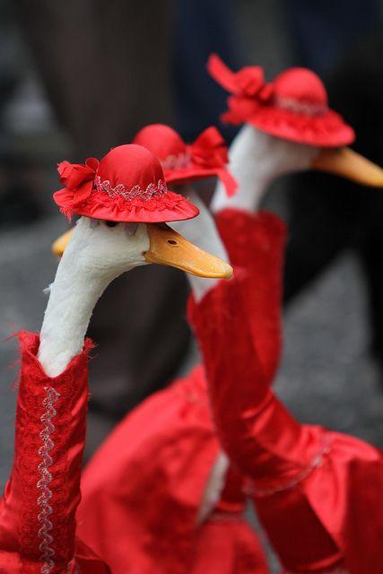 ファッションショーで赤色をまとうアヒル