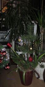 Christmas pine 2016