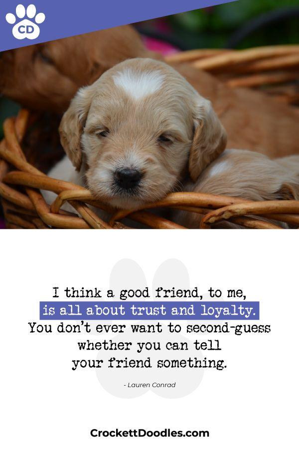 Crockett Doodles Is A Network Of Family Raised Doodles Read More At Www Crockettdoodles Com Crockettdoodles Dog Lover Quotes
