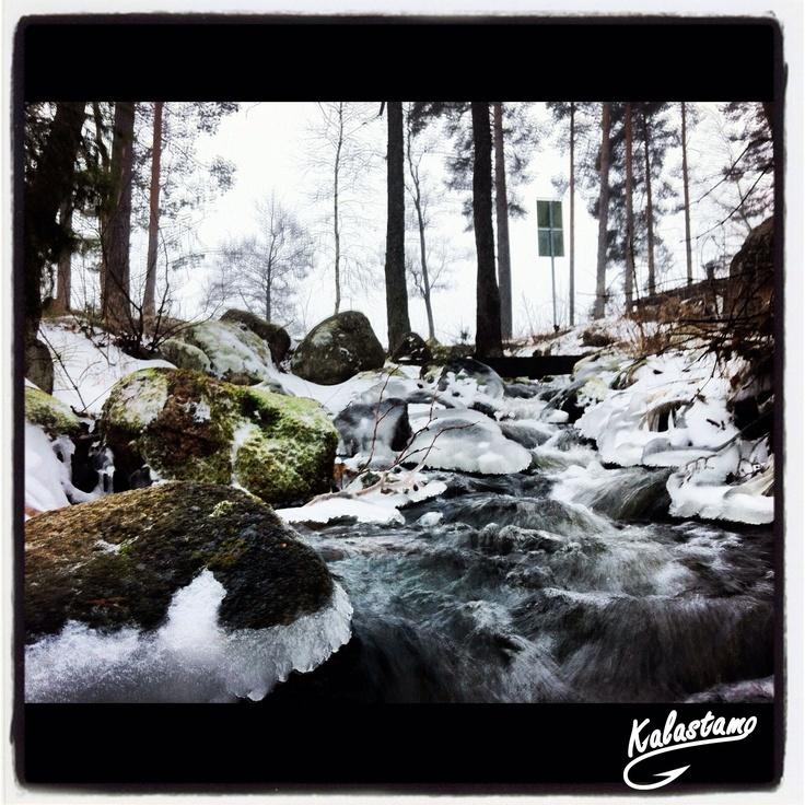 Stream - Puro -. www.kalastamo.com - Finland