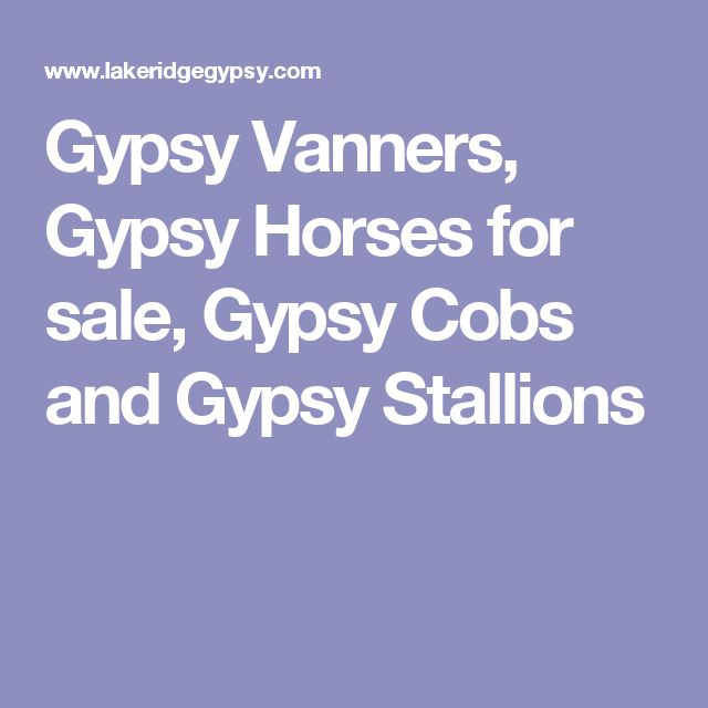 Gypsy Vanners, Gypsy Horses for sale, Gypsy Cobs and Gypsy Stallions