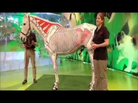 Horses Inside Out Interview with Liza Tarbuck - YouTube