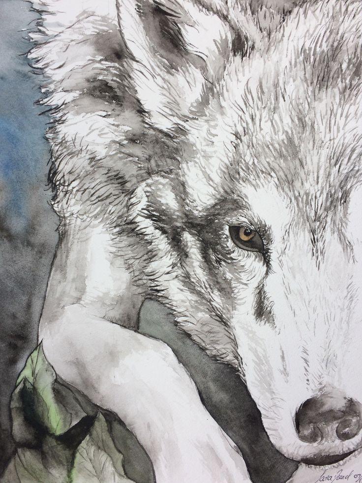 Nocturnal wolf. ~ Sara Noad