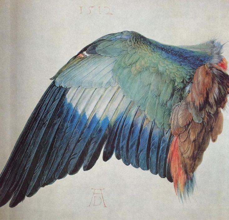 「青いローラー・カナリアの翼」デューラー 1512年 ベラム(仔牛の革)、水彩、グワッシュ  輝かしい青にエメラルドグリーンの入り混じった色彩。揺るがぬ細部描写により、飛翔時の羽根の機能が構造的に理解可能なまでに描き込まれている。
