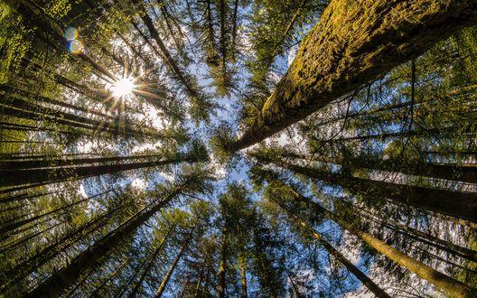 Кроны и стволы деревьев, вид снизу