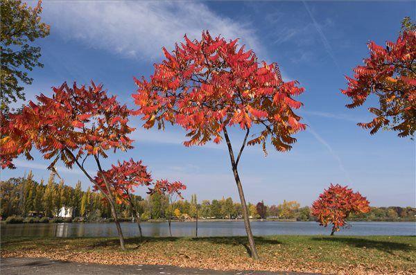 Őszi színekben pompázó fák a nyíregyházi Sóstó partján. MTI Fotó: Balázs Attila
