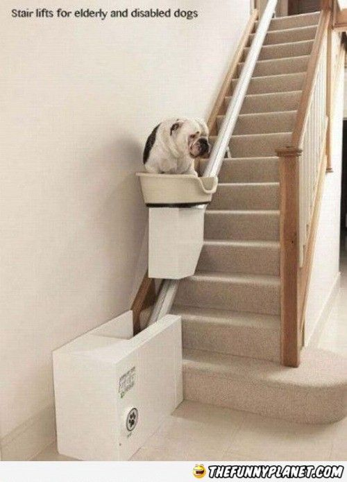 Stair Lifts For The Elderly | Stair Lifts For Elderly And Disabled Dogs.    TheFunnyPlanet