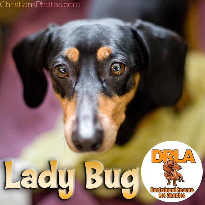 Adopt Lady Bug (Special Needs) on Lady bug, Cas and