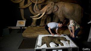 DivaDeaWeag / Lyuba, la bebé mamut, en el Museo de Historia Natural / Los expertos del museo di Historia Natural se emocionaron al abrir la caja en que viajo Lyuba.La bebe cria fue hallada en 2007 por un pastor de ciervos y su hijo en la peninsula rusa de Yamai,en Siberia ,y recibiò su nombre en honor a la esposa del descubridor Lyuba que en ruso quiere desir 'Amor,.. <3