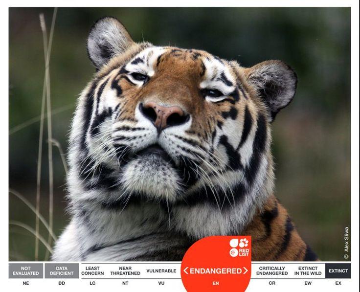 Cooperación internacional para identificar las áreas protegidas con mayor peligro de extinción