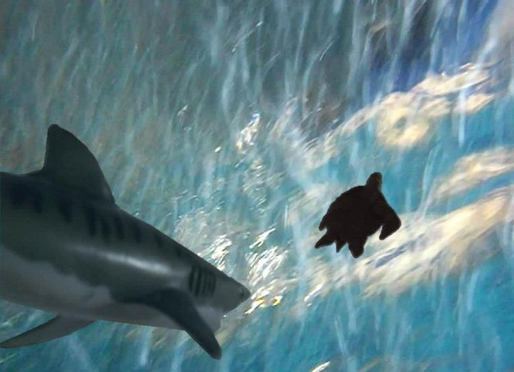Harley Yerdon's Shark Week contest photo, featuring the Monterey Bay Tiger Shark and a Galapagos TOOB® Marine Turtle.: Fans Photo, Contest Photo