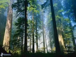 Výsledok vyhľadávania obrázkov pre dopyt les