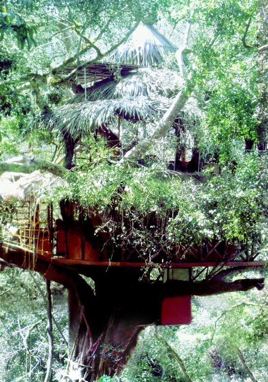 Unique Treetop Retreats ~ Green Magic Nature Resort, Kerala, India | Unique Travel Destinations
