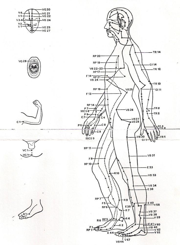 Les méridiens et points de la medecine chinoise, vue de profil.