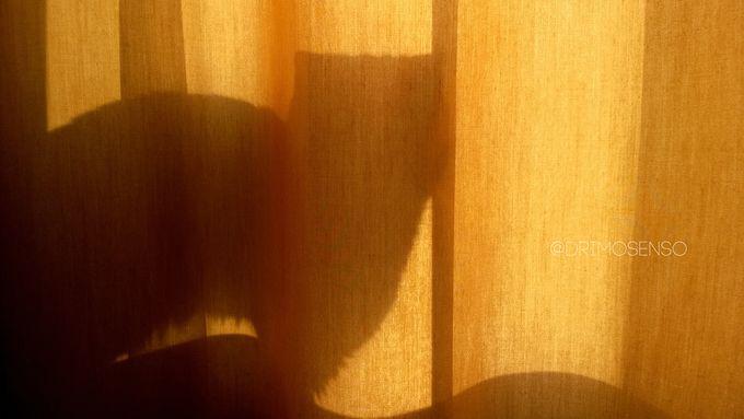 Cat shadow - Album on Imgur