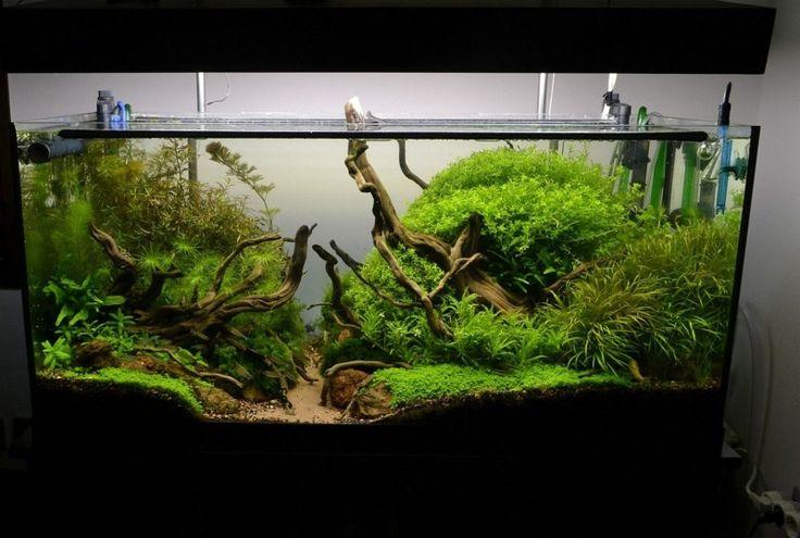 deko für aquarium tipps urwald imitation aeste