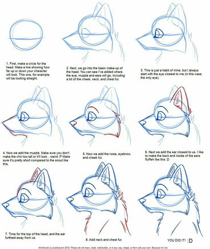 how to draw an anthro feline face