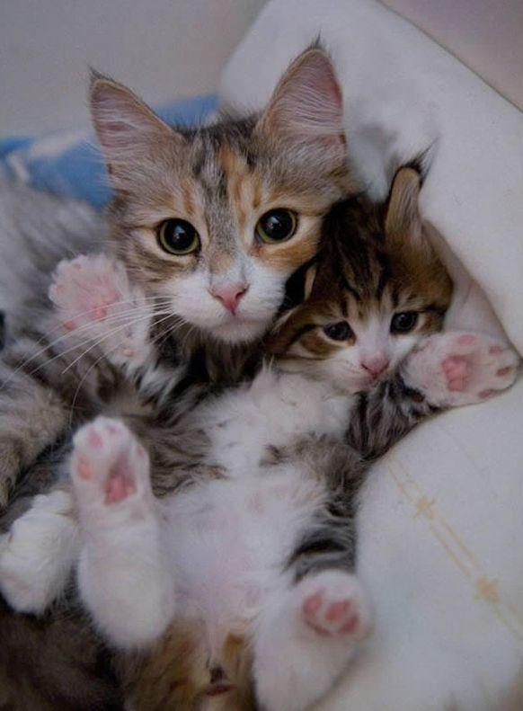 15 Katzen und ihre kleinen Kinder, auch Doppelgän…