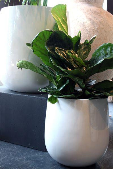 Contemporary Vase – Medium